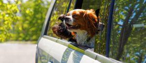 10 consejos para planificar un viaje por carretera con mascotas