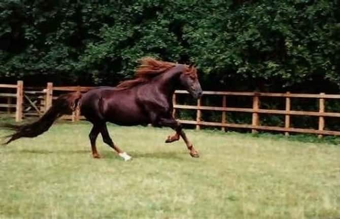 The most expensive horses in the world 00004