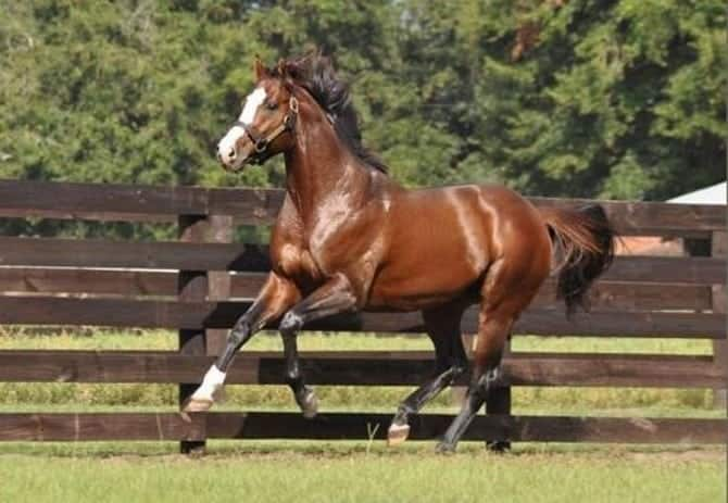 The most expensive horses in the world 00005