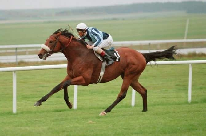 The most expensive horses in the world 00007