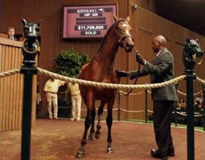 The most expensive horses in the world 00008