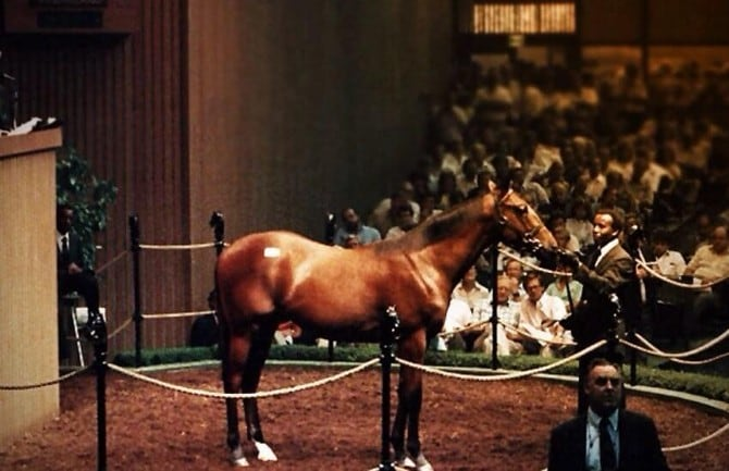 The most expensive horses in the world 00009