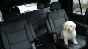 Chevy Tahoe back seat with Nellie